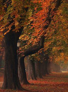 500px'te Jasmina Gorjanski tarafından An autumn series fotoğrafı