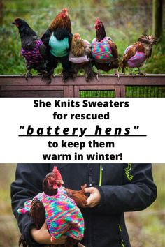 A woman is knitting tiny wool jumpers to keep her chickens warm
