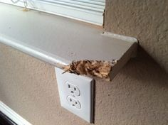 how to fix wood damaged molding... like that baseboard I dropped a concrete block on...