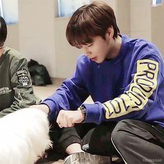 Park Jihoon and A FLIPPING CUTE DOGGO