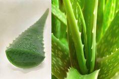 DIY Pore Minimizer Recipes ~ How to Use Aloe as a Pore Minimizer Mask