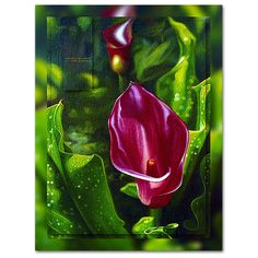 Consider the Lillies 4 - Consider the Lilies. This work was created from a photograph reflecting the beauty and pleasure in a Red Cala Lily Oil Painting Original Oil Painting, Fine Art, Photographer, Image, Painting, Oil Painting, Art, Pictures