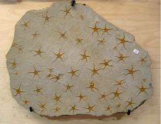 Starfish fossils ... this is so cool! When you see a pretty print you normally attribute it to a talented fashion designer, but pre-historic fossils can give them a run for their money! This starfish fossils cluster is mesmerizing!  Geology Wonders