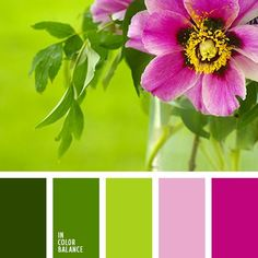 Color Palette Fresh, soft and touching composition like an awakening of the fist spring leaves. Smooth transitions of green in combination with pink and fuchsia – harmon. Color Schemes Colour Palettes, Green Colour Palette, Color Combos, Green Contrast Color, Spring Color Palette, Pantone, Color Balance, Balance Design, Design Seeds