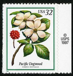 32c Pacific Dogwood single
