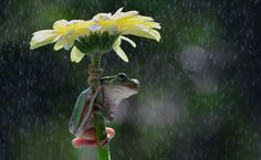 14+ Animals With Natural Umbrellas