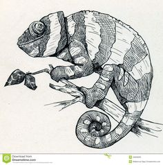 chameleon drawing - Google Search
