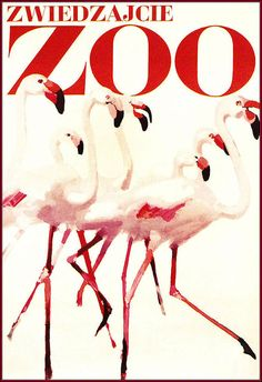 Warsaw Zoo Poland 1967 Flamingos - Vintage Poster Print Art Retro Advertisement…