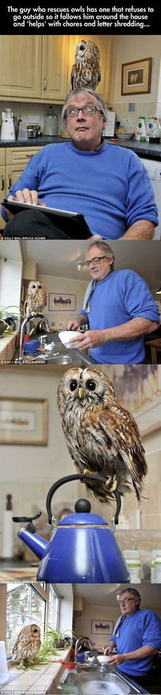 The Cutest Owl Ever