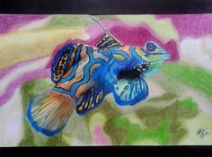 Desenho realista feito com lápis de cor por Carol Soares / Realistic draw made with color pencil by Carol Soares #realisticpainting #fish #colorful  #AlmaDasCores