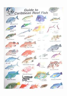 1000 images about ocean life on pinterest coral reefs for Ocean fish names