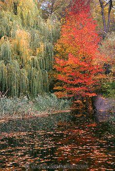 autumn in New York (photo by Dan Heller)