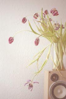 depois que as tulipas morrem elas continuam lindas