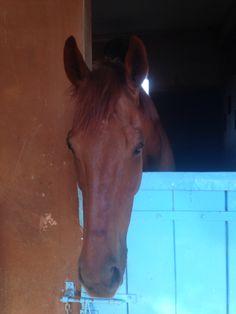 Awww I ❤️❤️❤️❤️❤️ horses