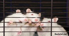 WikiLeaks emails mention aspartame, acknowledging it puts holes in mice brains Natural News, Natural Health, Mitragyna Speciosa, Research Lab, Chemical Industry, Animal Protection, Environmental Health, National Institutes Of Health, Sick Kids