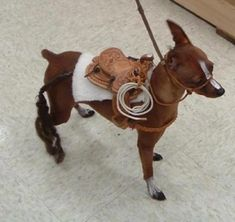 Too cute!! Miniature Pinscher disguised as a horse.