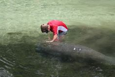 Manatees are very gentle! They visit our dock area daily.