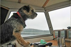 Border Joy - For Border Terriers & Their People