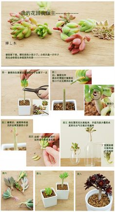 In another language, lots of photo's on a how to of Succulents. Garden Terrarium, Succulent Terrarium, Garden Pots, Cacti And Succulents, Planting Succulents, Cactus Plants, Zen Sand, Air Plants, Indoor Plants