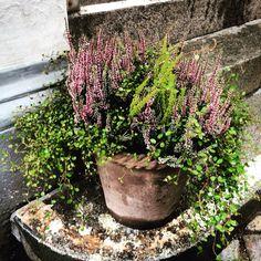 Blomsterverkstad: Höst i luften