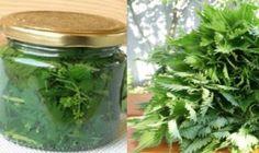 POZOR!! Iba jedno toto ovocie na prázdny žalúdok a 2 kg zmiznú za 2 dni! - Báječné zdravie Herb Garden, Home And Garden, Healthy Style, Home Canning, Lemonade, Pickles, Natural Remedies, Life Is Good, Mason Jars