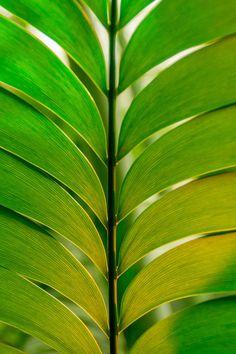 Green by Ingeborg Zigterman - http://ift.tt/1dk4Hcd