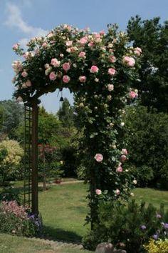Pierre de Ronsard / Eden Rose www.allaboutrosegardening.com/Eden-Rose.html