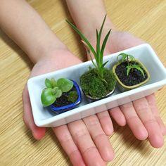 多肉植物などのミニ盆栽