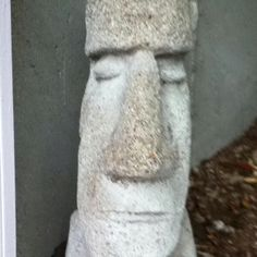 Easter Island guy