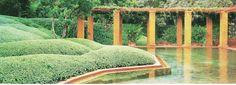 Fernando Caruncho - Garden at Casa Caruncho Urban Landscape, Landscape Design, Garden Design, Lush Garden, Water Garden, Madrid, Green Architecture, Landscape Architecture, Evergreen Hedge