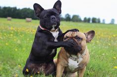 """Lola and Pepe ... looks like a """"Shhh, don't say it!"""""""