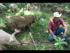 Joel Salatin is a farmer in the Shenandoah Valley of Virginia. He possesses more common sense than any one man I have ever met. He speaks to college students, writes books, and successfully runs Polyface Farms with uncommon brain-power. See if you agree. I watched fifteen Youtube Videos in a row when I first heard of this man. Thanks Facebook.
