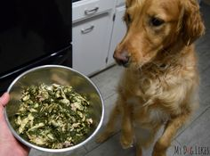 Amazing diet for dogs with cancer. Carbs & sugars feed cancer cells. Kibble is a no-go!    Dr. Harvey's Paradigm – A New Whole Food, Low Carb Diet for Dogs
