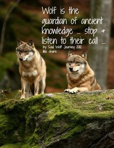 Wolf is the guardian of ancient knowledge...stop and listen to their call... by Soul Wolf Journey.