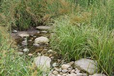 Promote pure water and a beautiful landscape with a garden design that makes the most of the rain