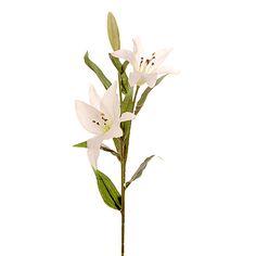 Лилия «Вивальди», белая, 70 см, TM Scorpio