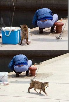 a kitty fish thief :-))