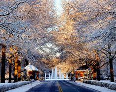 Furman University Snow