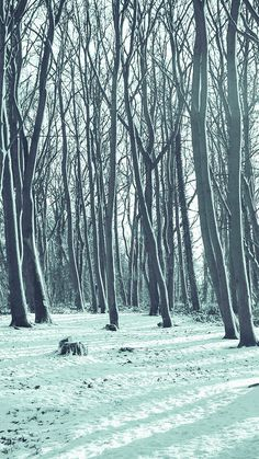Cold Winter Forest Snow Nature Mountain Blue  #iPhone #6 #plus #wallpaper