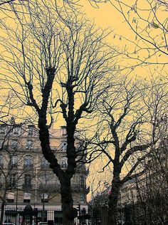 tree- paris