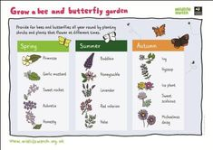 How to grow a bee and butterfly garden