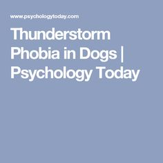 Thunderstorm Phobia in Dogs | Psychology Today