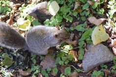 More about Squirrels from Wildwoods