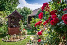 Czerwone róże w wiejskim ogrodzie. Arch, Projects To Try, Backyard, Outdoor Structures, Garden, Plants, Hosting, Google, Longbow