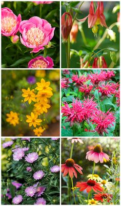 Perennials Designed to Withstand the Harshest of Winters