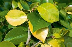 Agregar nitrógeno a las plantas como fertilizante - http://jardineriaplantasyflores.com/agregar-nitrogeno-a-las-plantas-como-fertilizante/