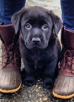 Knuffiger Hundewelpe mit schwarzen Augen und schwarzem Fell