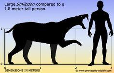 columbian mammoth vs wooly mammoth - Google Search
