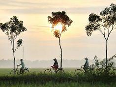 Cycling-Rice-Paddies