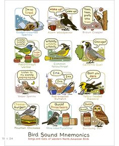Learn bird sounds with this Bird Sound Mnemonics Print (Western edition). Comes in two sizes! Bird & Moon.